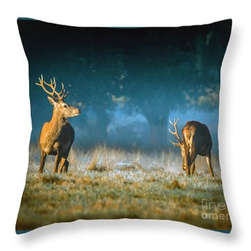 Two Stags Throw Pillow