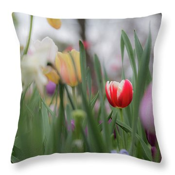 Throw Pillow featuring the photograph Unique by Dheeraj Mutha