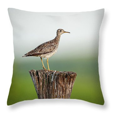 Throw Pillow featuring the photograph Upland Sandpiper On Fence Post by Jeff Phillippi