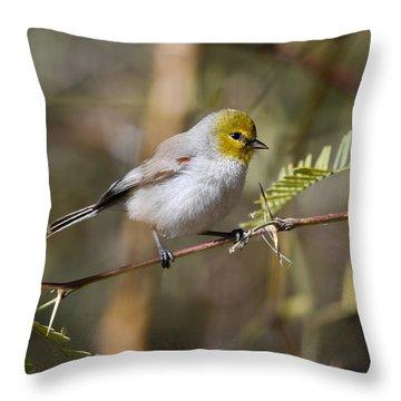 Verdin Throw Pillow