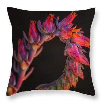 Vibrant Arc Throw Pillow