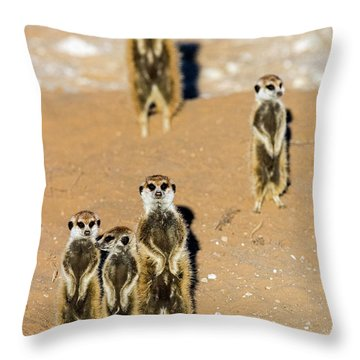 View Of Standing Meerkats Suricata Throw Pillow