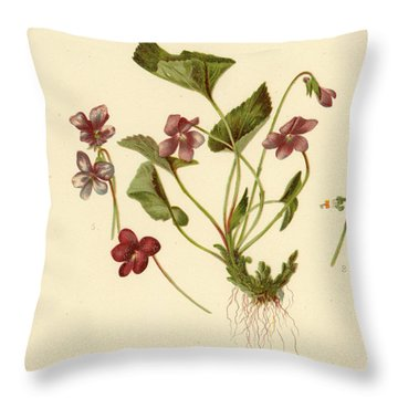 Viola Cucullata  Common Blue Violet Throw Pillow