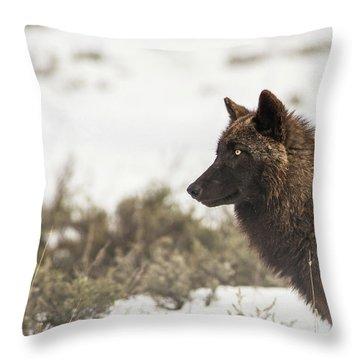 W11 Throw Pillow
