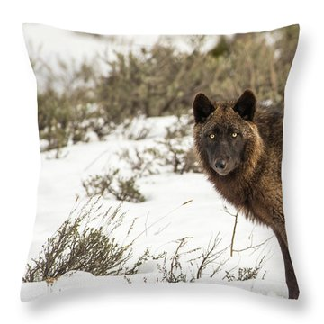 W12 Throw Pillow