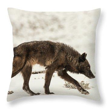W13 Throw Pillow