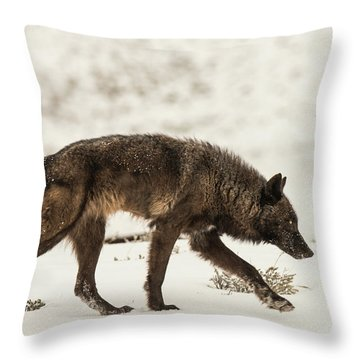 W13 Throw Pillow
