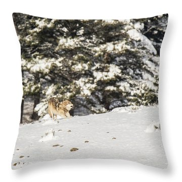 W14 Throw Pillow