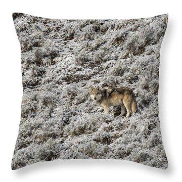 W17 Throw Pillow