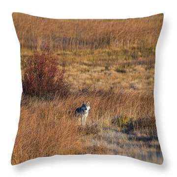W2 Throw Pillow