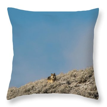 W24 Throw Pillow