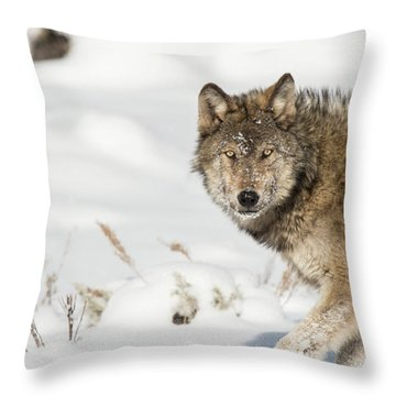 W35 Throw Pillow