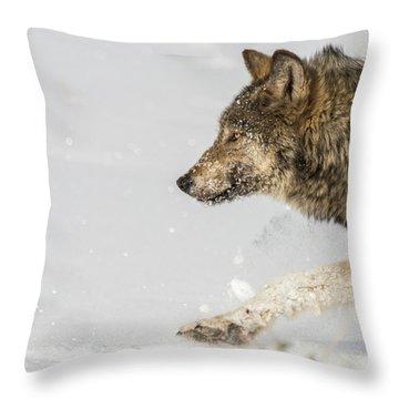 W36 Throw Pillow