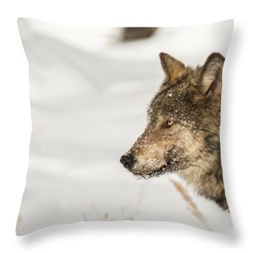 W37 Throw Pillow