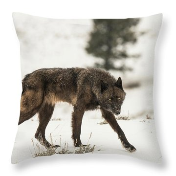 W42 Throw Pillow