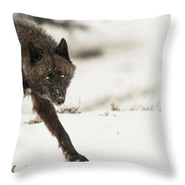 W43 Throw Pillow