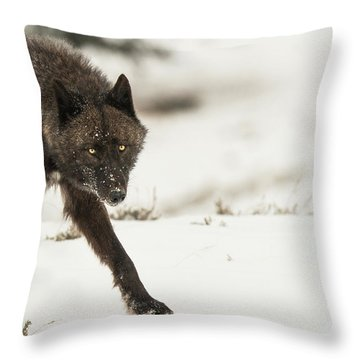 W43 Throw Pillow