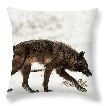 W44 Throw Pillow