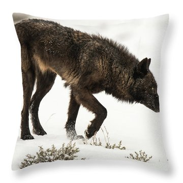 W47 Throw Pillow