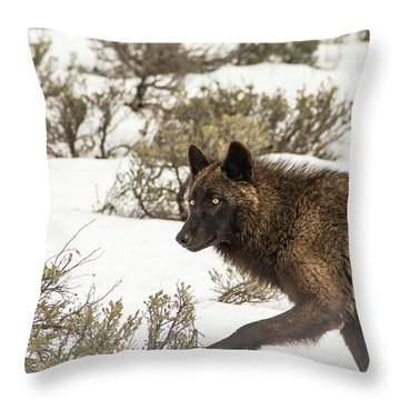 W5 Throw Pillow