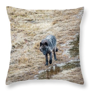W51 Throw Pillow