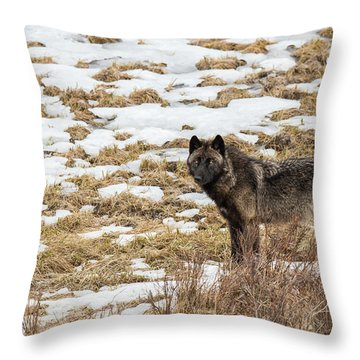 W59 Throw Pillow