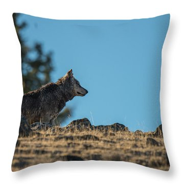 Throw Pillow featuring the photograph W61 by Joshua Able's Wildlife