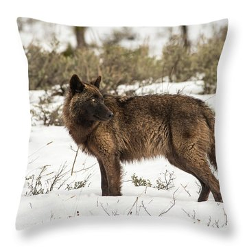 W9 Throw Pillow