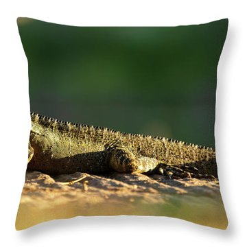 Throw Pillow featuring the photograph Water Dragon Lizard Outdoors by Rob D Imagery