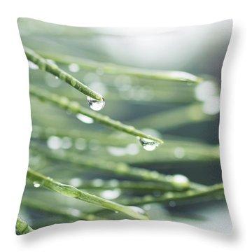 Throw Pillow featuring the photograph Water Droplets On Fir Needles by Charmian Vistaunet