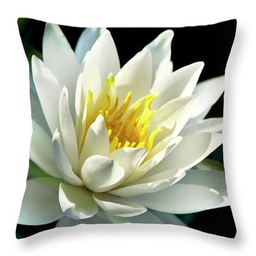 Throw Pillow featuring the photograph Water Lily by Christina Rollo