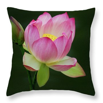 Throw Pillow featuring the photograph Water Lily In The Pond by Howard Bagley