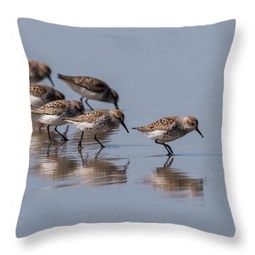 Western Sandpipers And Reflection Throw Pillow