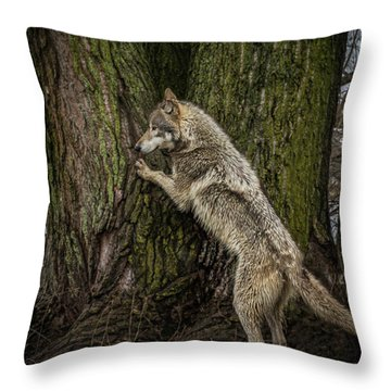 What's In There Throw Pillow