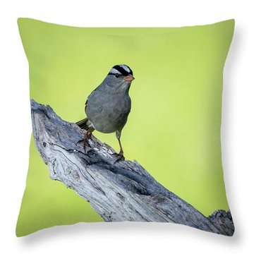White Crowned Sparrow 1 Throw Pillow