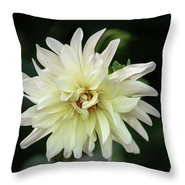 Throw Pillow featuring the photograph White Dahlia Beauty by Dale Kincaid