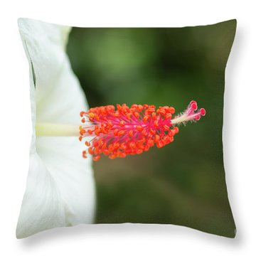 Throw Pillow featuring the photograph White Hibiscus With Pink Pistil And Stamens by Charmian Vistaunet
