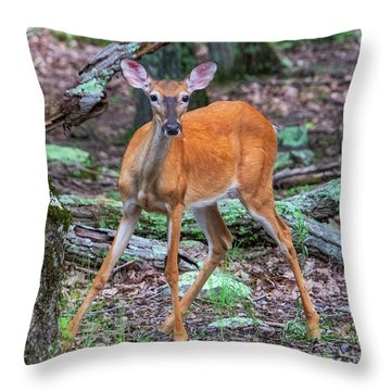 White Tail Deer Throw Pillow