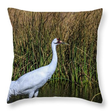 Whooping Crane In Pond Throw Pillow