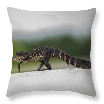 Why Did The Gator Cross The Road? Throw Pillow