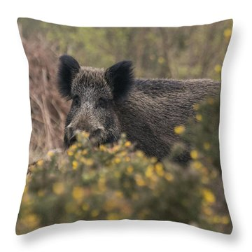 Wild Boar Sow Throw Pillow