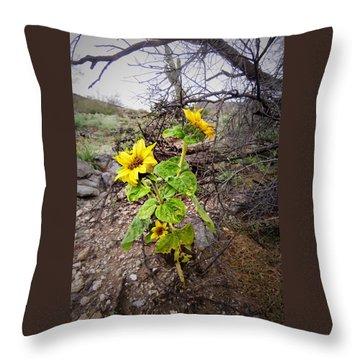 Wild Desert Sunflower Throw Pillow