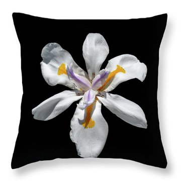Wild Iris On Black  Throw Pillow