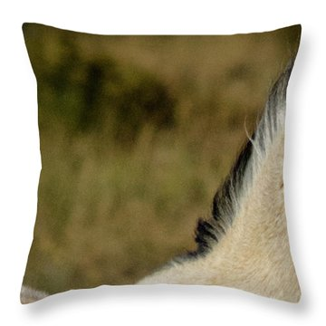Wild Mustangs Of New Mexico 5 Throw Pillow