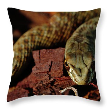Wild Snake Malpolon Monspessulanus In A Tree Trunk Throw Pillow