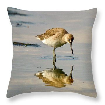 Willet Sees Its Reflection Throw Pillow