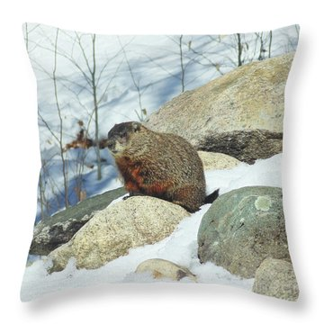 Winter Groundhog Throw Pillow