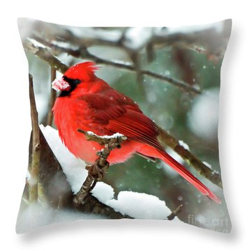 Winter Red Bird - Male Northern Cardinal With A Snow Beak Throw Pillow