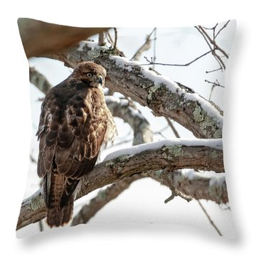Throw Pillow featuring the photograph Winter Red-tailed Hawk by Lara Ellis
