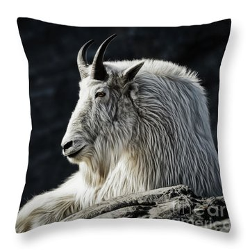 Throw Pillow featuring the photograph Wisdom From Up High by Brad Allen Fine Art
